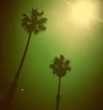 View of palm trees in the moonlight from vanlife